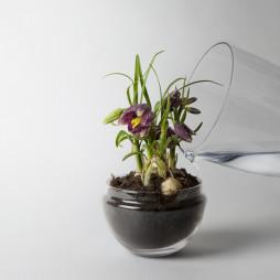 Grow greenhouse