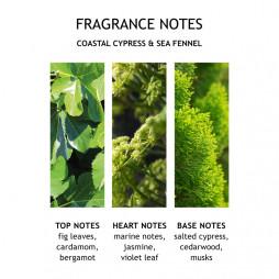 Hand Wash, Coastal Cypress & Sea Fennel Fine Liquid