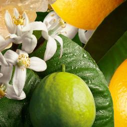 Hand Lotion, Orange & Bergamot